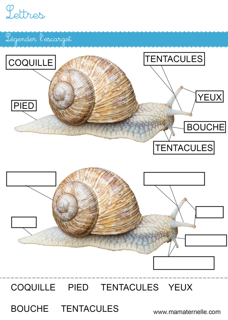 Moyenne section - Lettres : légender l'escargot