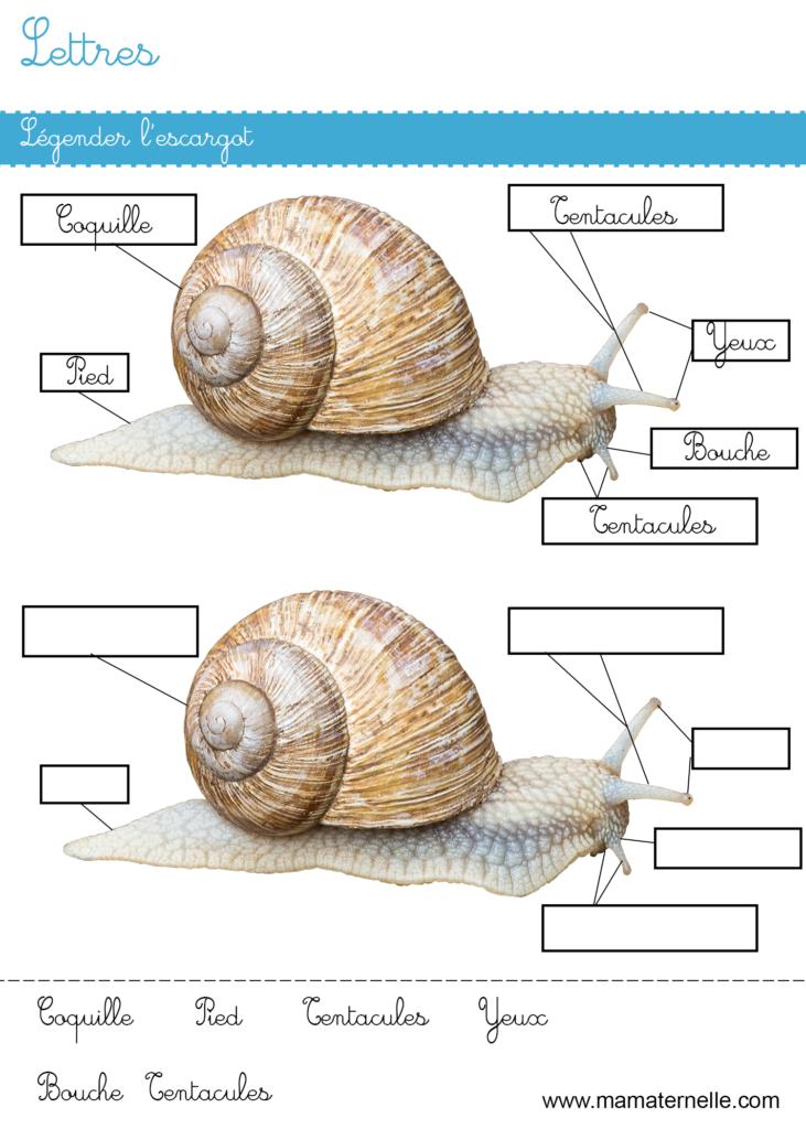 Grande section - Lettres : légender l'escargot