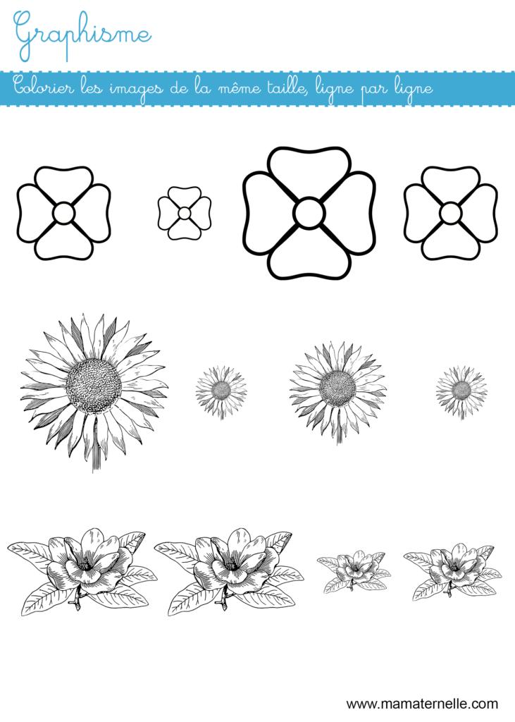 Moyenne section - Graphisme : colorier les images de la même taille