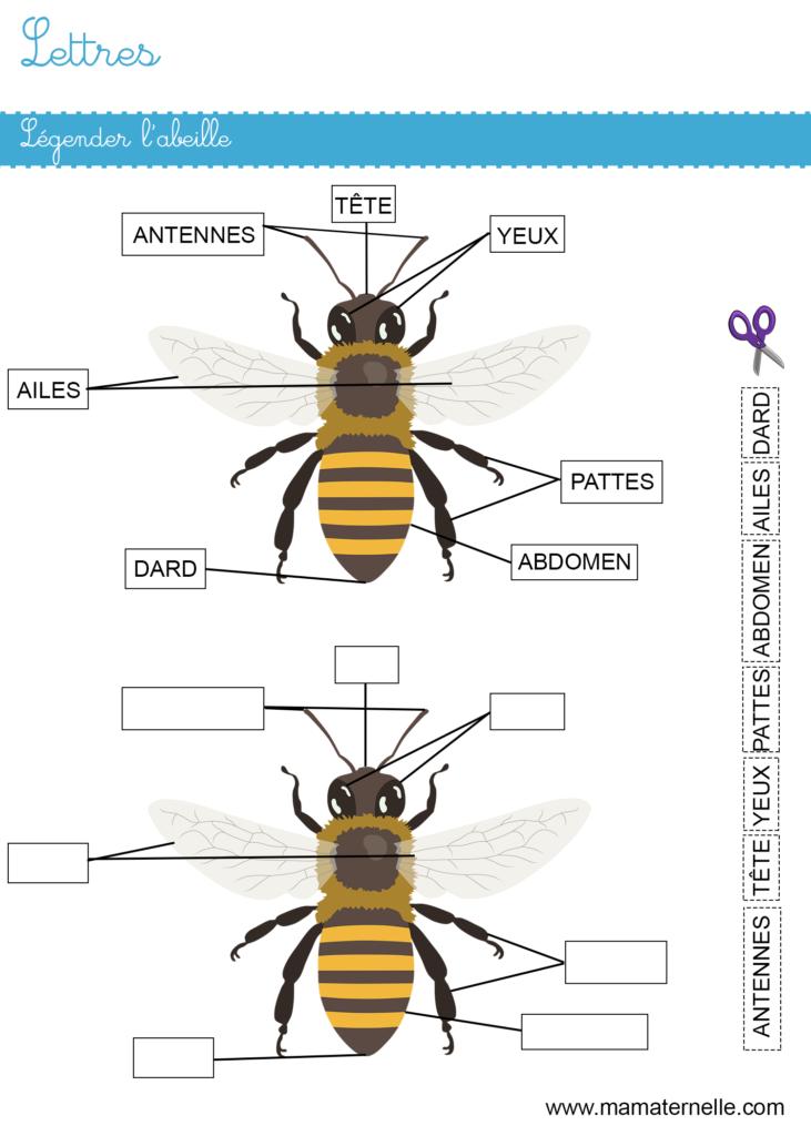 Moyenne section - Lettres : légender l'abeille